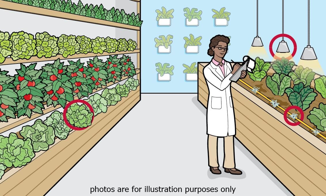 Indoor Farming cutt cycle almost 72 times ( High end Plant ) | For Sale | Look For Buyer - Business for Sale, Buy a Ready Business